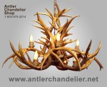 Real Antler Mule Deer Aspen Inverted Chandelier MDRC-I