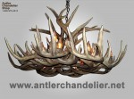 Real Antler XL White-tail Oval Chandelier WTXLOval