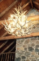 Real Antler White-tail / Mule Deer Cascade Chandelier WT/MD-1