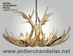 Real Antler Mule Deer Chandelier MDST-2