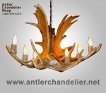 Real Antler Moose Single-Tier Chandelier MooseSnglTr