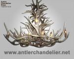 Real Antler Whitetail / Mule Deer Combo Chandelier WTMDCombo-9