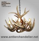 Real Antler White-tail Chandelier WTR-1