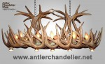 Reproduction Whitetail Chandelier with Optional Downlights CRL-28