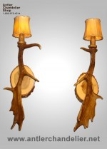 Real Antler Fallow Sconce