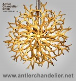 Real Antler Yellowstone Mule Deer / Whitetail Chandelier AplchnMDWT