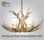 Real Antler Mule Deer Chandelier MDSP1