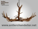 Real Antler Elk Oblong Chandelier
